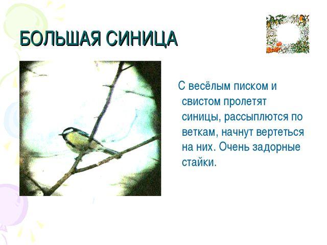 БОЛЬШАЯ СИНИЦА С весёлым писком и свистом пролетят синицы, рассыплются по вет...