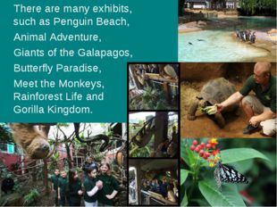 There are many exhibits, such as Penguin Beach, Animal Adventure, Giants of t