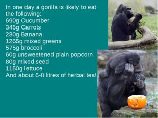 In one day a gorilla is likely to eat the following: 690g Cucumber 345g Carro