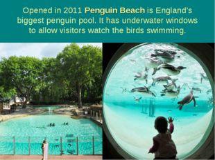 Opened in 2011 Penguin Beach is England's biggest penguin pool. It has underw