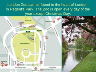 London Zoo can be found in the heart of London, in Regent's Park. The Zoo is