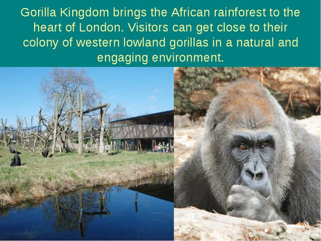 Gorilla Kingdom brings the African rainforest to the heart of London. Visitor...