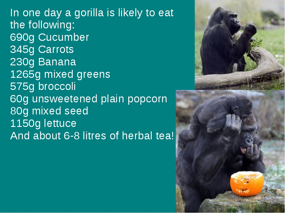 In one day a gorilla is likely to eat the following: 690g Cucumber 345g Carro...