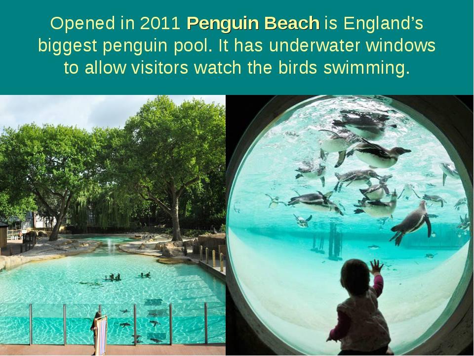 Opened in 2011 Penguin Beach is England's biggest penguin pool. It has underw...