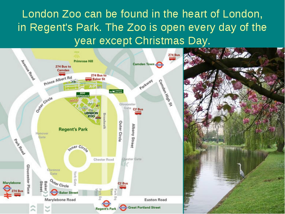 London Zoo can be found in the heart of London, in Regent's Park. The Zoo is...