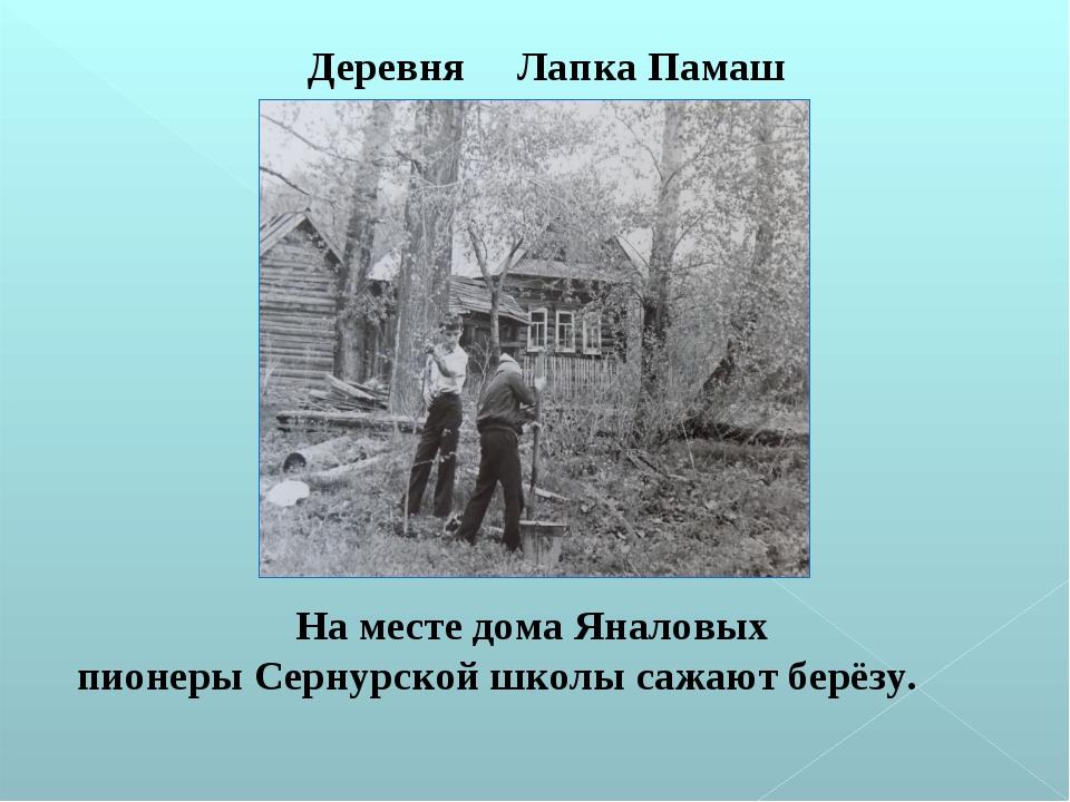 На месте дома Яналовых пионеры Сернурской школы сажают берёзу. Деревня Лапка...