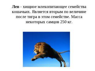 Лев - хищное млекопитающее семейства кошачьих. Является вторым по величине по