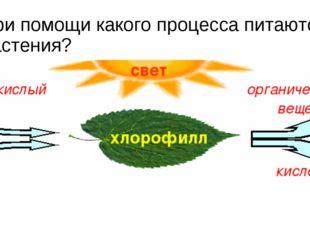 При помощи какого процесса питаются растения?