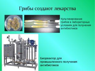 Грибы создают лекарства Культивирование грибов в лабораторных условиях для по