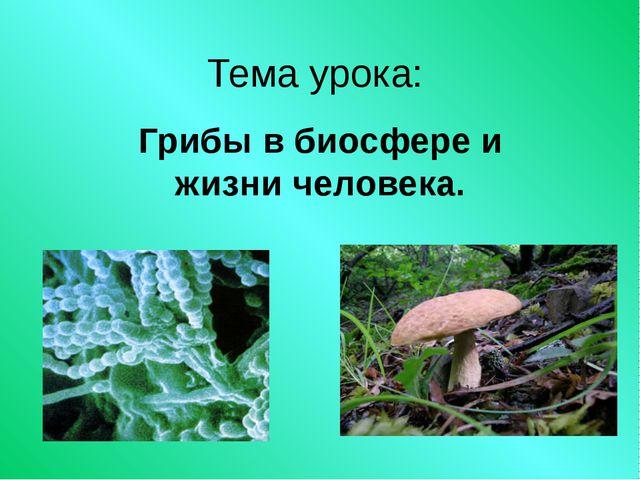 Тема урока: Грибы в биосфере и жизни человека.