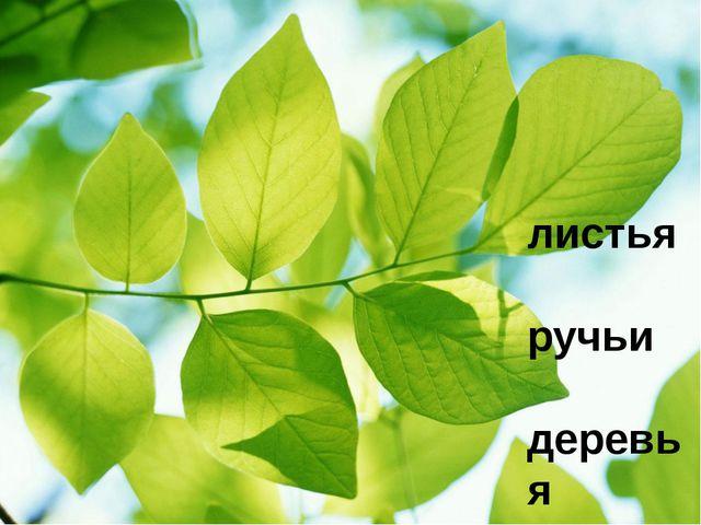 листья ручьи деревья