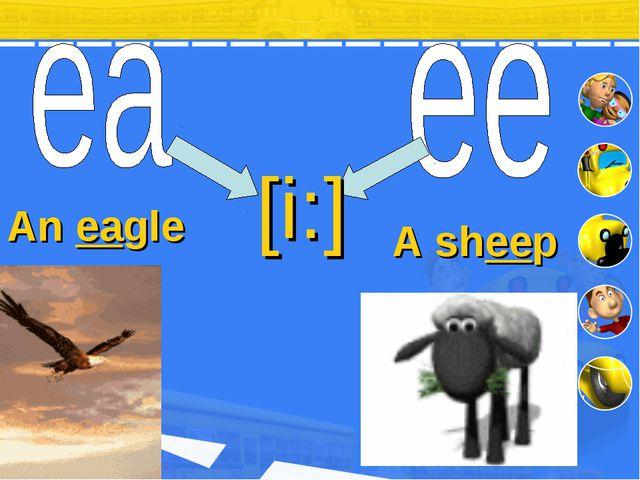 [i:] An eagle A sheep