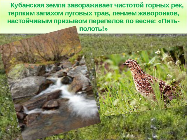 Кубанская земля завораживает чистотой горных рек, терпким запахом луговых тр...