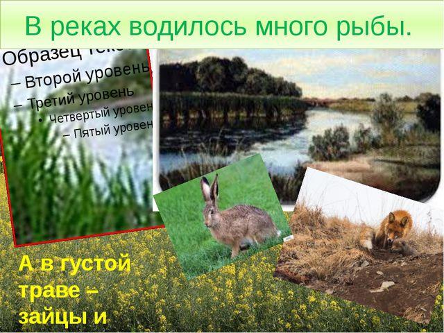 В реках водилось много рыбы. А в густой траве – зайцы и лисы.