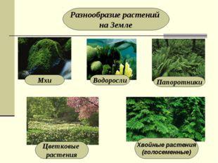 Разнообразие растений на Земле Мхи Водоросли Папоротники Цветковые растения Х