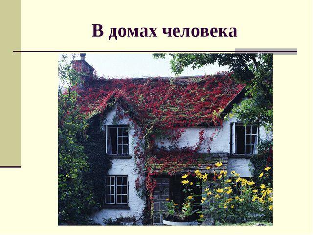 В домах человека