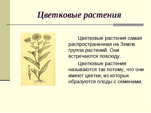 Цветковые растения Цветковые растения самая распространенная на Земле групп...