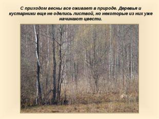 С приходом весны все оживает в природе. Деревья и кустарники еще не оделись л
