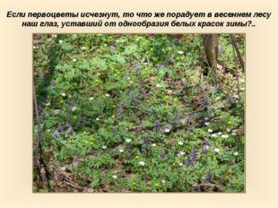 Если первоцветы исчезнут, то что же порадует в весеннем лесу наш глаз, уставш