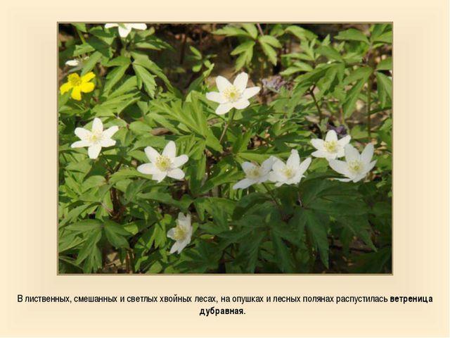 В лиственных, смешанных и светлых хвойных лесах, на опушках и лесных полянах...