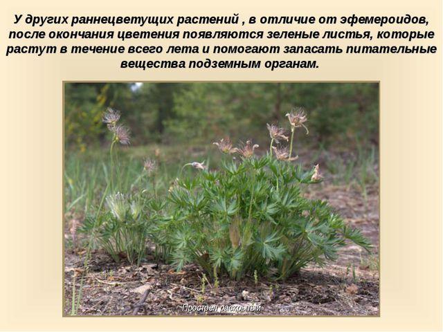 У других раннецветущих растений , в отличие от эфемероидов, после окончания ц...