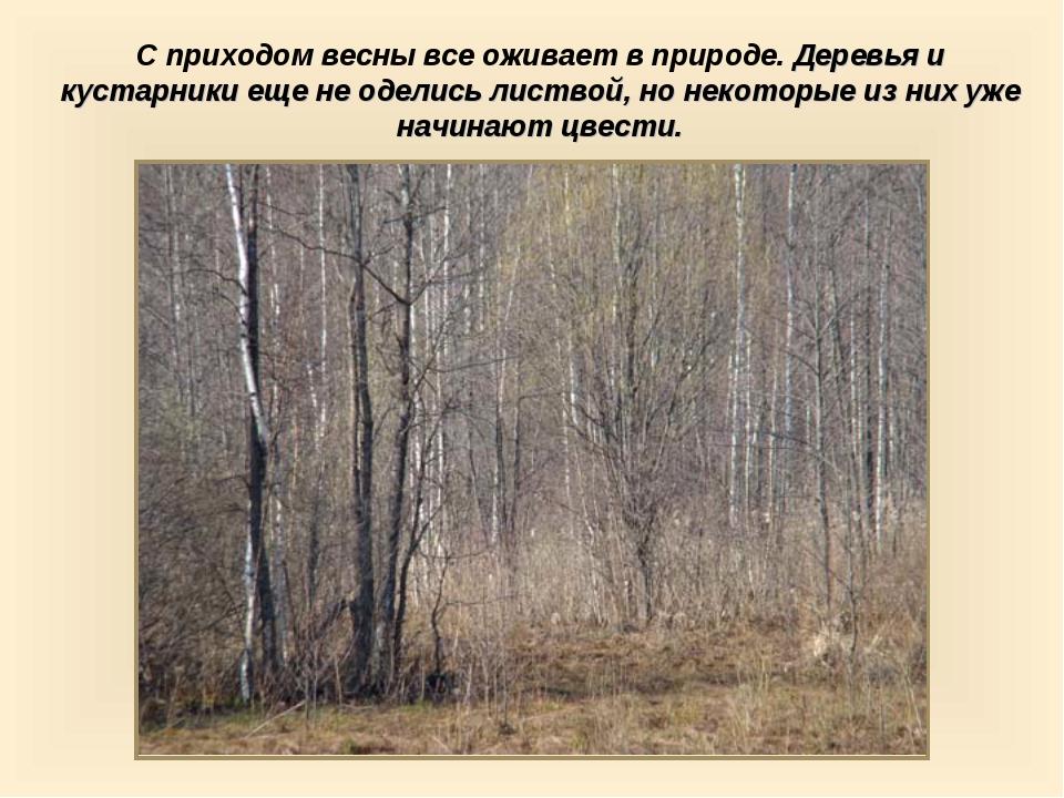 С приходом весны все оживает в природе. Деревья и кустарники еще не оделись л...