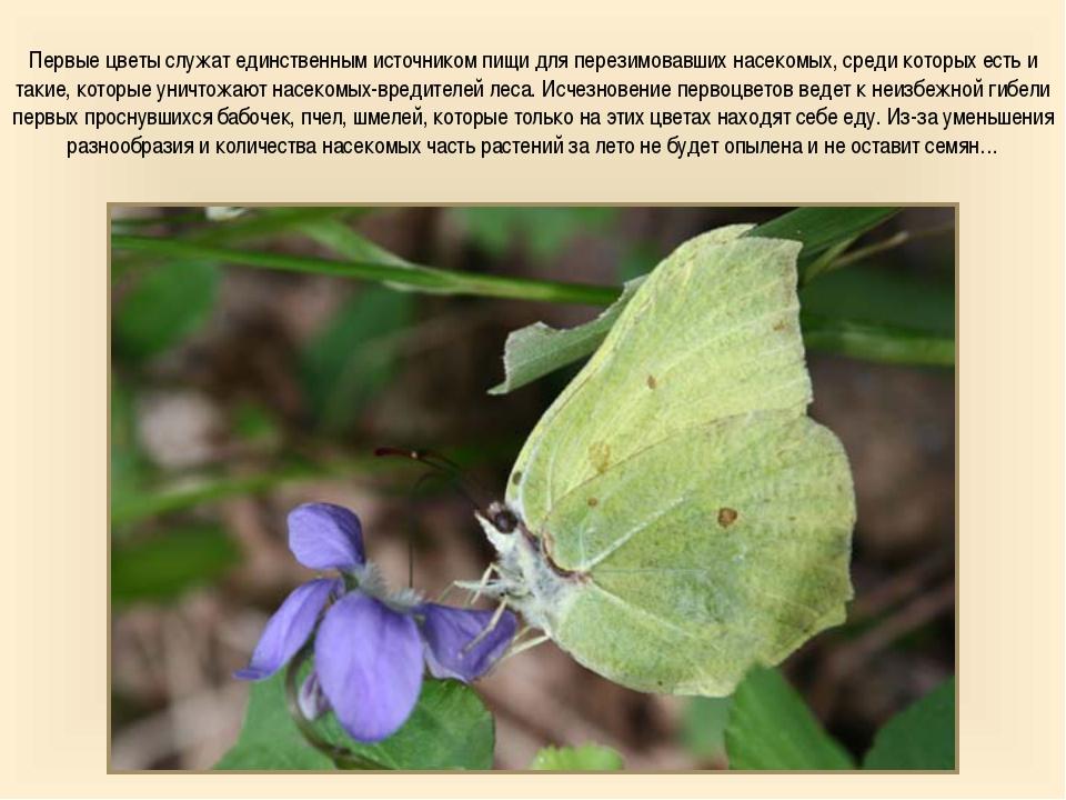 Первые цветы служат единственным источником пищи для перезимовавших насекомых...
