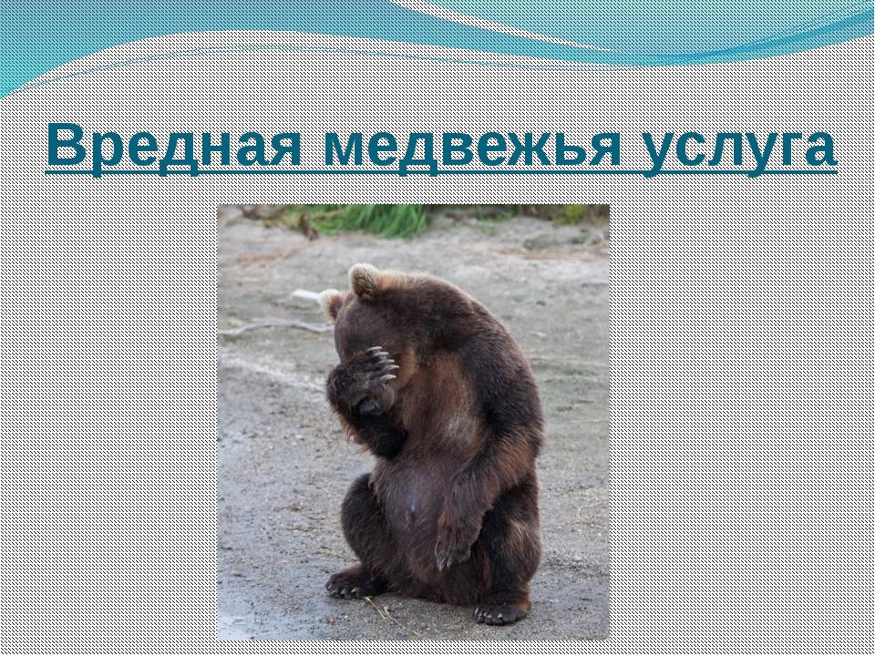 Вредная медвежья услуга