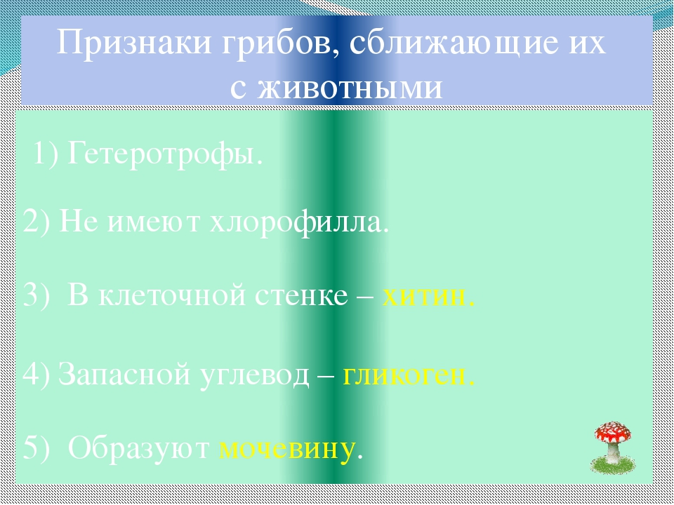 Признаки грибов, сближающие их с животными 1) Гетеротрофы. 2) Не имеют хлороф...