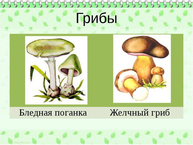 Грибы Бледная поганка Желчный гриб
