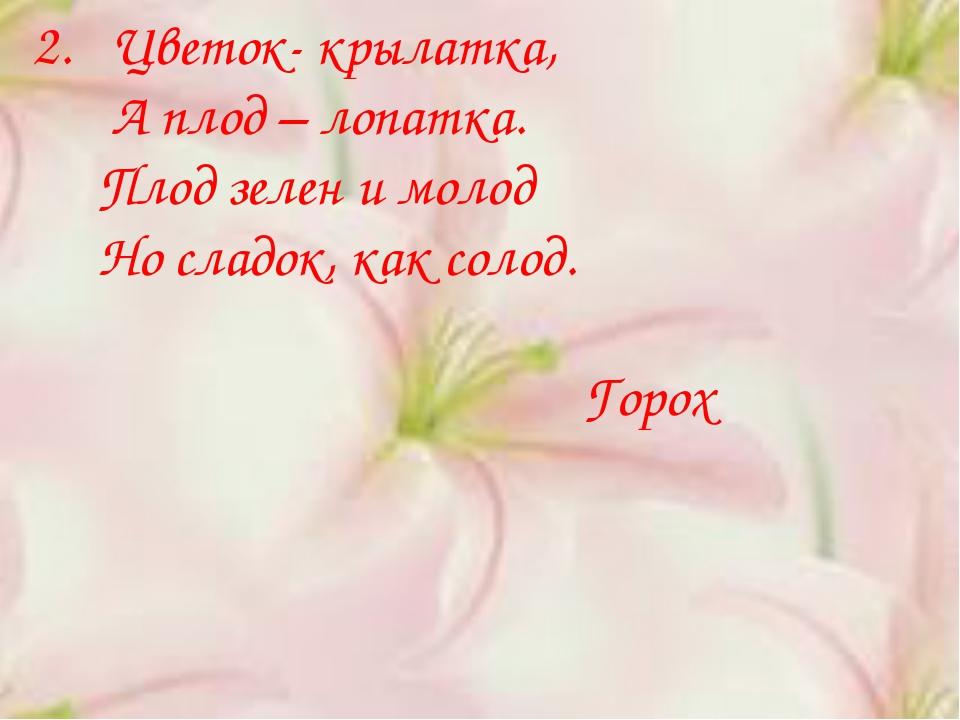 2. Цветок- крылатка, А плод – лопатка. Плод зелен и молод Но сладок, как соло...