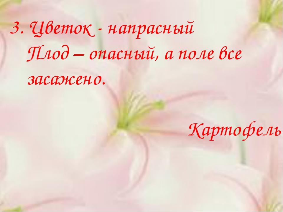 3. Цветок - напрасный Плод – опасный, а поле все засажено. Картофель