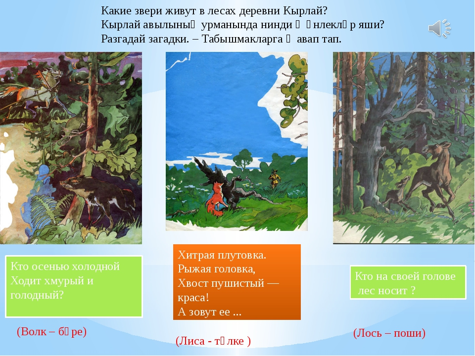 Какие звери живут в лесах деревни Кырлай? Кырлай авылының урманында нинди җән...