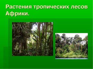 Растения тропических лесов Африки.