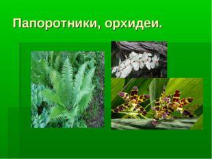 Папоротники, орхидеи.