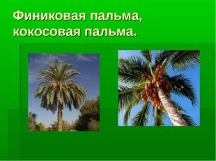 Финиковая пальма, кокосовая пальма.