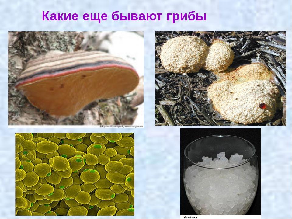 Какие еще бывают грибы