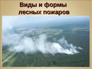 Виды и формы лесных пожаров