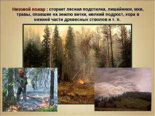 Низовой пожар : сгорает лесная подстилка, лишайники, мхи, травы, опавшие на з
