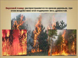 Верховой пожар: распространяется по кронам деревьев, при этом воздействию огн