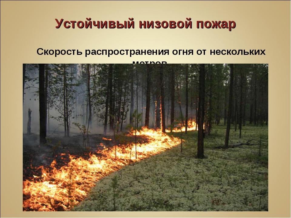 Устойчивый низовой пожар Скорость распространения огня от нескольких метров...