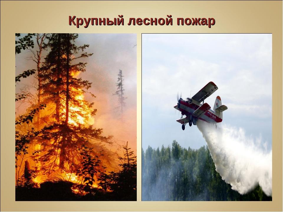 Крупный лесной пожар