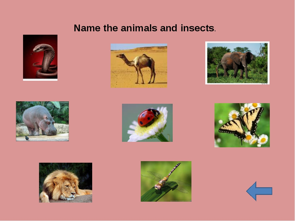 Name the animals and insects.
