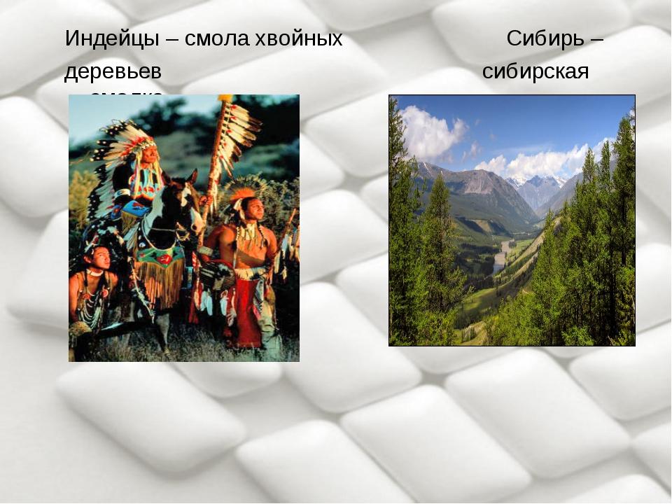 Индейцы – смола хвойных Сибирь – деревьев сибирская смолка