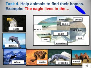 Task 4. Help animals to find their homes. Example: The eagle lives in the… ea