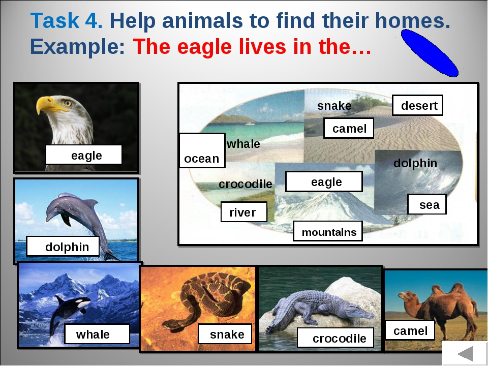 Task 4. Help animals to find their homes. Example: The eagle lives in the… ea...