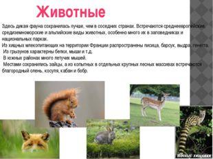 Животные Здесь дикая фауна сохранилась лучше, чем в соседних странах. Встреча