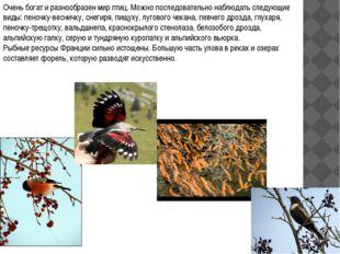 Очень богат и разнообразен мир птиц. Можно последовательно наблюдать следующи