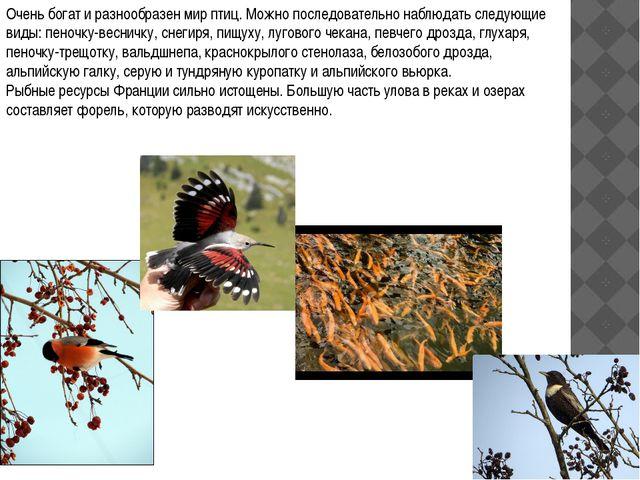 Очень богат и разнообразен мир птиц. Можно последовательно наблюдать следующи...