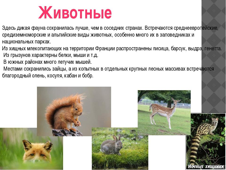 Животные Здесь дикая фауна сохранилась лучше, чем в соседних странах. Встреча...